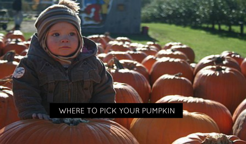 London Ontario Pumpkin Patches for the Picking