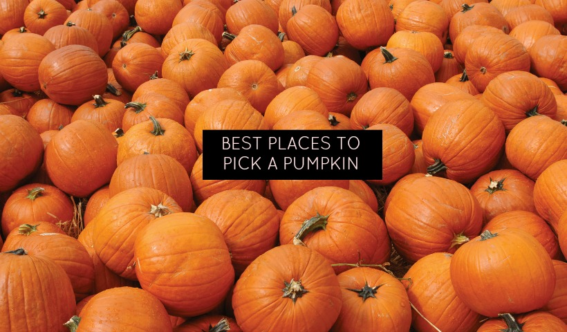 pumpkinpatch_cover1.jpg